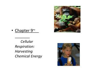 Chapter 9~			 Cellular Respiration:  Harvesting Chemical Energy
