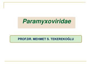 Paramyxoviridae