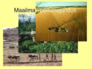 Maailma    põllumajandus