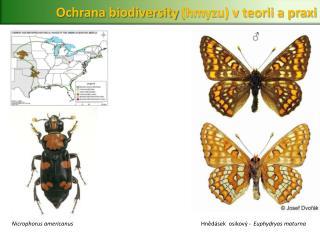 Ochrana  biodiversity  (hmyzu) v teorii a praxi