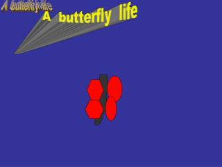 A  butterfly live
