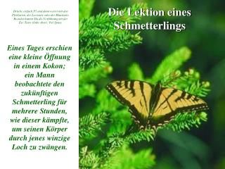 Die Lektion eines Schmetterlings