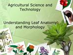 Agricultural Science and Technology    Understanding Leaf Anatomy and Morphology