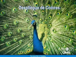 Despliegue de Colores