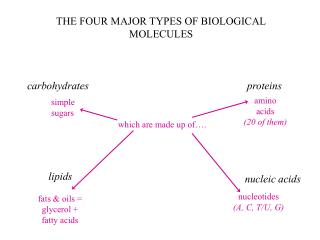 THE FOUR MAJOR TYPES OF BIOLOGICAL MOLECULES