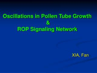 Oscillations in Pollen Tube Growth   &  ROP Signaling Network