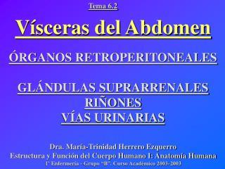 Vísceras del Abdomen ÓRGANOS RETROPERITONEALES GLÁNDULAS SUPRARRENALES RIÑONES VÍAS URINARIAS