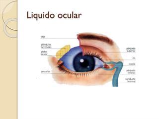 Liquido ocular