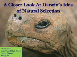 A Closer Look At Darwin�s Idea of Natural Selection