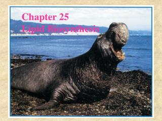 Chapter 25 Lipid Biosynthesis