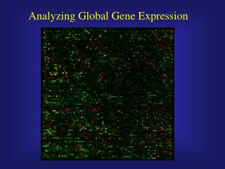 Analyzing Global Gene Expression