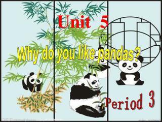 Why do you like pandas?