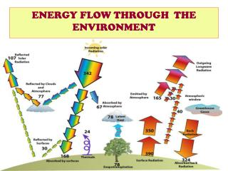 ENERGY FLOW THROUGH  THE ENVIRONMENT
