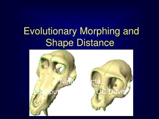 Evolutionary Morphing and  Shape Distance