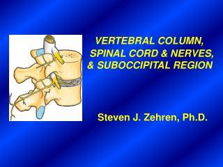 VERTEBRAL COLUMN,  SPINAL CORD & NERVES, & SUBOCCIPITAL REGION Steven J. Zehren, Ph.D.