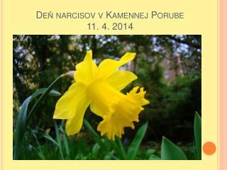 Deň narcisov v Kamennej Porube 11. 4. 2014