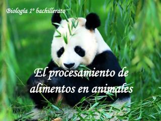 El procesamiento de alimentos en animales