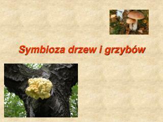 Symbioza drzew i grzybów