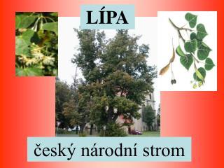český národní strom
