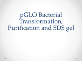 pGLO  Bacterial  Transformation, Purification and SDS gel