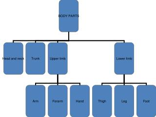 Joints  of upper limb