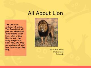 All About Lion