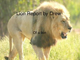 Lion Report by Drew