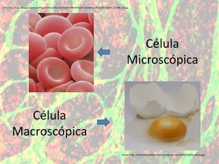 Célula Microscópica