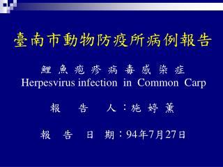 臺南市動物防疫所病例報告 鯉  魚  疱  疹  病  毒  感  染  症 Herpesvirus infection  in  Common  Carp