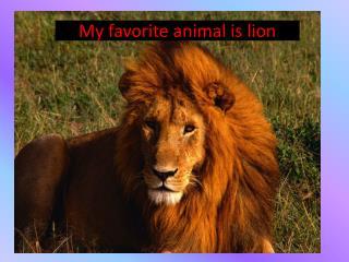 M y favorite animal is lion