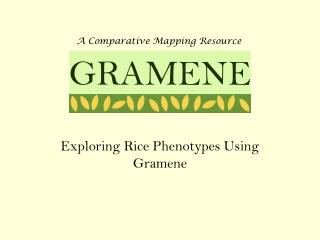 Exploring Rice Phenotypes Using Gramene