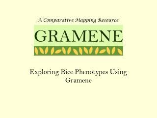 Exploring Rice Phenotypes Using Gramene