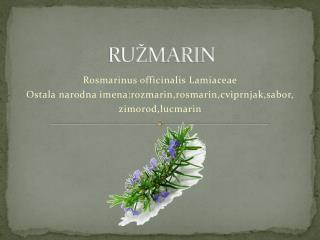 RUŽMARIN