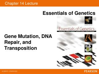 Gene Mutation, DNA Repair, and Transposition