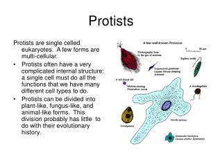 Protists