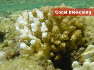 Coral bleaching