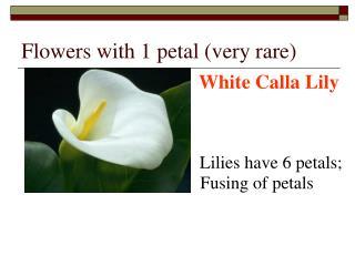 Flowers with 1 petal (very rare)