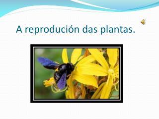 A reprodución das plantas.