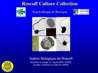 Roscoff Culture Collection Souchoth�que de Bretagne