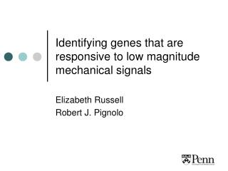 Identifying genes that are responsive to low magnitude mechanical signals