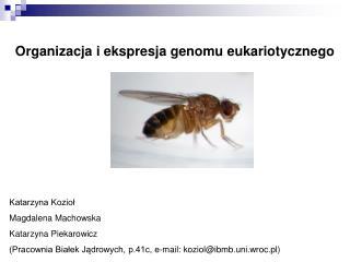 Organizacja i ekspresja genomu eukariotycznego