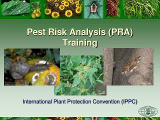 Pest Risk Analysis (PRA) Training