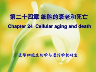 第二十四章 细胞的衰老和死亡  Chapter 24  Cellular aging and death
