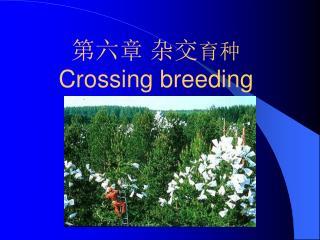 第六章 杂交 育种 Crossing breeding