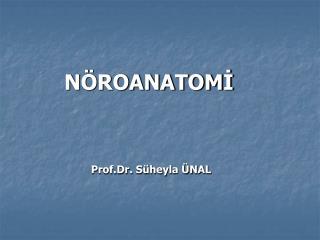 NÖROANATOMİ Prof.Dr. Süheyla ÜNAL
