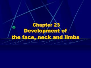 Chapter 23  Development of  the face, neck and limbs