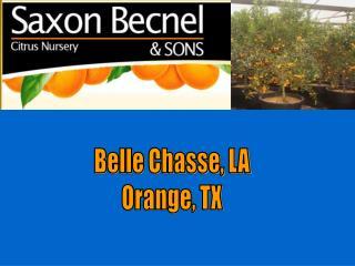 Belle Chasse, LA Orange, TX