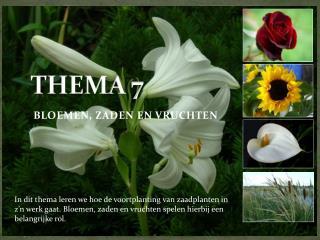 THEMA 7