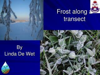 Frost along a  transect