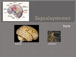 Signalsystemet